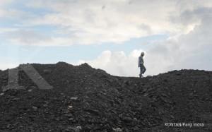 pekerja menunjukan bongkahan batu bara, PT Exploitasi Energi Indonesia Tbk (E2I) melakukan aktivitas penambangan batubara di Site Bantuas milik PT Mutiara Etam Coal (MEC), Samarinda Timur, Kaltim, Jumat (13/9). Penambangan di lokasi seluas 175 hektar itu untuk diekspor ke China dan India yang saat ini produksi di Tambang Bantuas sebesar 30.000 metrik ton (MT) per bulan dan pada Januari 2014 akan ditingkatkan menjadi 100.000 MT per bulan. Kontan/Panji Indra